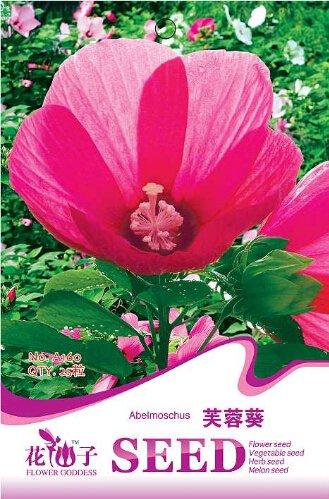 1 Original Pack, 25 graines / paquet, Rose Belle Southern Hibiscus moscheutos Disco Belle Hardy énorme usine de semences de fleurs # A160