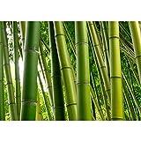 Vlies Fototapete 400x280 cm PREMIUM PLUS Wand Foto Tapete Wand Bild Vliestapete - PARADISE OF BAMBOO - Bambuswald Bambus Wald Asien Asia Baum Bamboo Way Bambusweg Grün - no. 075