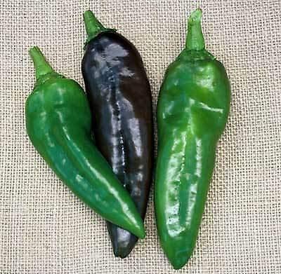 Generic Seeds: Pfeffer Anaheim Chili 2500 Samen Weitere nötig? Fragen -