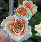 #6: M-Tech Gardens Rare Grafted Multicolor Rainbow Rose Flower 1 Healthy Live Plant