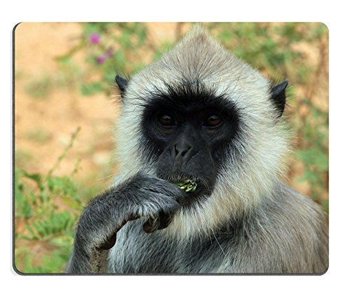 liili-mouse-pad-natural-rubber-mousepad-close-up-of-a-grey-langur-semnopithecus-schistaceus-mangiare