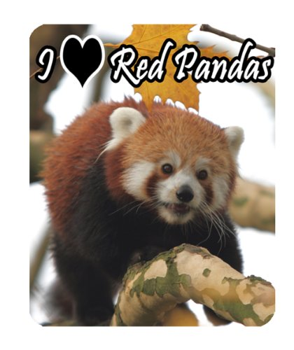red-panda-del-mouse-wildlife