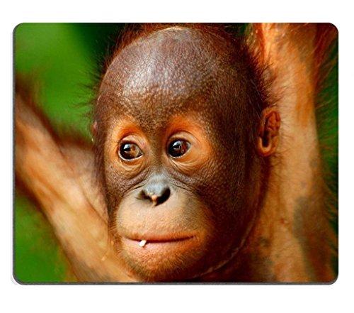 baby-orang-utan-ape-affe-tiere-maus-pads-made-um-um-unterstutzung-bereit-9-7-203-cm-250-mm-x-7-7-203