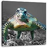 große Schildkröte über Korallenriff schwarz/weiß, Format: 40x40 auf Leinwand, XXL riesige Bilder fertig gerahmt mit Keilrahmen, Kunstdruck auf Wandbild mit Rahmen, günstiger als Gemälde oder Ölbild, kein Poster oder Plakat