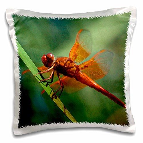 Danita Delimont - Dragonflies - USA, California, San Diego, Mission Trails Regional Park. Dragonfly. - 16x16 inch Pillow Case (pc_205493_1) (Trails Park Mission)