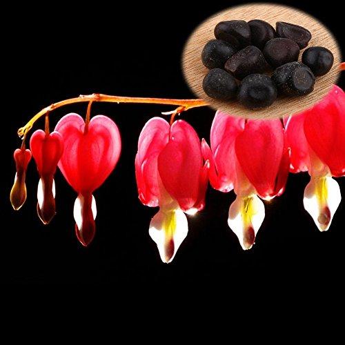 10Pcs Graines de Pivoine Fleurs à planter vivace à Feuilles Herbe Décoration Pour Jardin Maison Gazon ( Couleur : Rouge )