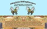 VGO... Schlupfwespen gegen Lebensmittelmotten 1 Karte 3 Lieferungen zur biologischen Schädlingsbekämpfung