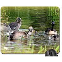 Canada Goose mouse pad, Mousepad (Birds mouse pad)