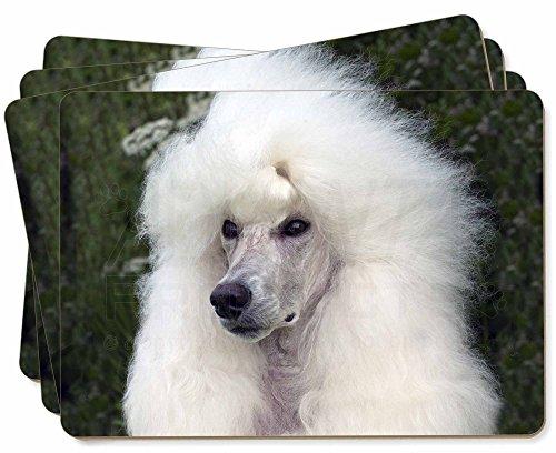 Advanta - Place Mats Weißer Pudel -Hund Bild Tischsets in Geschenkbox Weihnachten Tisch Geschenk -