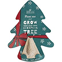 Grow Your Own Christmas Tree Hanging Decoration