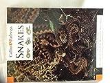 Pathways to Literacy (Year 4/Stage 5) – Snakes: Set B Reader (Collins Pathways)
