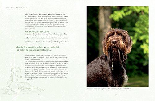 Freilauftraining für den Hund - 6