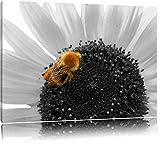 süße Biene auf großer Sonnenblume schwarz/weiß auf Leinwand, XXL riesige Bilder fertig gerahmt mit Keilrahmen, Kunstdruck auf Wandbild mit Rahmen, günstiger als Gemälde oder Ölbild, kein Poster oder Plakat