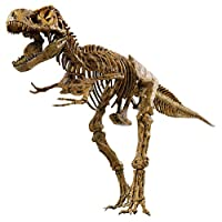 "Edu Science T-Rex Skeleton 36"" Scale Replica Model"
