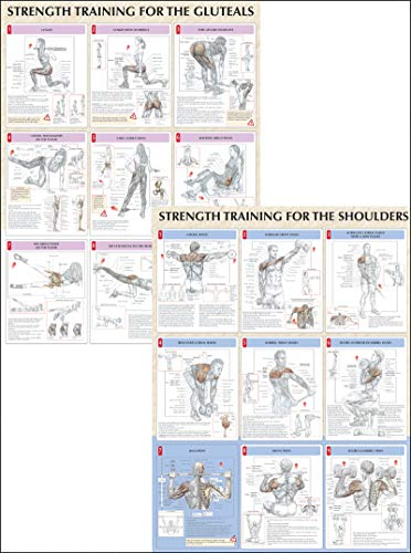 Strength Training Anatomy Poster Series por Frederic Delavier