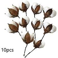 SinceY 10pcs / Set Einzelner Kopf Trocknete Blumen-Baumwolle Mit Dem Kurzen Zweig Konservierte Frische Blume Künstliche Baumwollzweig DIY Materielle Dekoration Hochzeits-Ausgangsdekor