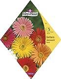 Royalfleur PFRV00505 Gerbera Jamesonii-Hybriden, Blumen, Pictorial Packet variiert