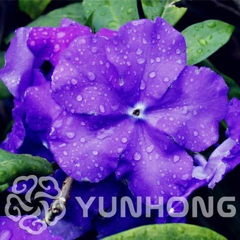 Bloom Green Co. 564-XSAF-267CV-54738