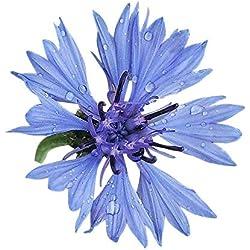 1000 Samen **Blaue Kornblume** -Centaurea cyanus- -Himmelblaue Blütenbracht-