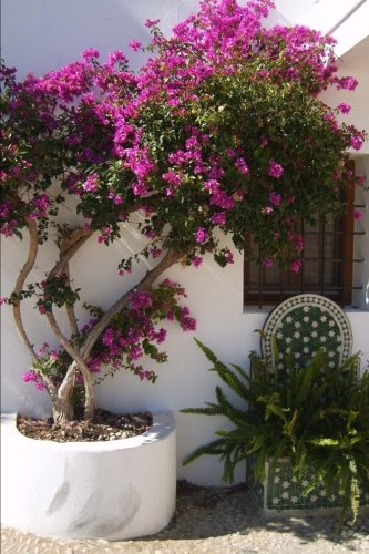 Plants in a Sunny Spanish Courtyard Journal: 150 Page Lined Notebook/Diary