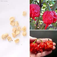ScoutSeed D374 10 unids Rare Pepper Chilli Seeds Super Pungent Seed Garden Outdoor Living