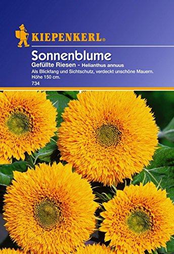 saatgut-sonnenblumen-gefullte-riesen