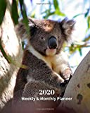 2020 Weekly and Monthly Planner: Baby Koala - Monthly Calendar with U.S./UK/ Canadian/Christian/Jewish/Muslim Holidays- Calendar in Review/Notes 8 x 10 in.-Wildlife Koala Bear Nature Australia