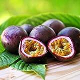 Passiflora edulis (Maracuja o Frutto della Passione) [Vaso Ø15cm]