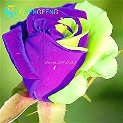 Shopmeeko 50 Sementes A Pack Rose Bush Blumenpflanzen Schöne, doppelte Rosenpflanzen Garten Diy Bonsai Flowers Plant Semillas. Bonsai Für: Rot