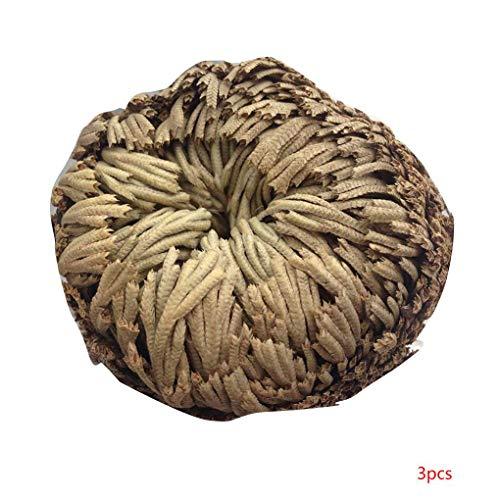 Beaums Praktische Live-Auferstehung Pflanze Rose von Jericho Dinosaurier-Pflanze Air Fern Spike Moss Selaginella
