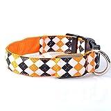 STRUGGGE LED-Hundehalsband, um Ihren Hund Sicherheit zu halten, Nylon Regular Halsbänder mit Metall-D-Ring und Kunststoff-Schnalle, verstellbar