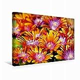 Premium Textil-Leinwand 45 cm x 30 cm quer Delosperma Blüten | Wandbild, Bild auf Keilrahmen, Fertigbild auf echter Leinwand, Leinwanddruck (CALVENDO Natur)