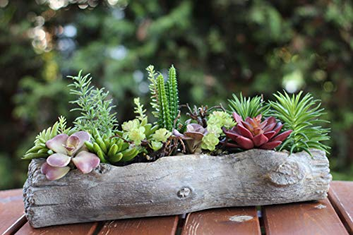 Sukkulenten Mix | 12 künstliche Pflanzen | Naturgetreu | Topf in Holzoptik | Wohnaccessoires | Deko für Wohnung und Garten