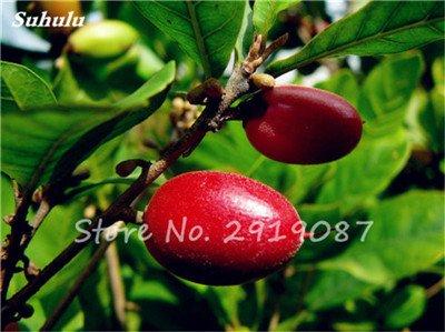 30 Pcs Tropical miraculine Fruit graines Anacardium Arbre Pot Plante Occidentale Jardins des plantes Miracle Fruit Légumes Livraison gratuite 15