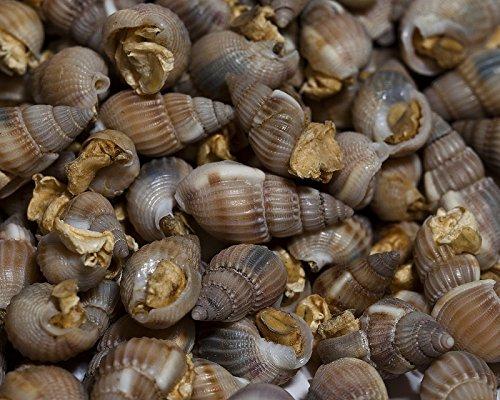 Futterschnecken 50g - Lebendfutter Ersatz für Kugelfische, Schmerlen, Cichliden und Krebse