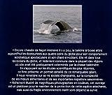 Image de Baleines a bosses