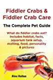 Fiddler Crabs & Fiddler Crab Care The Complete Pet Guide What do fiddler crabs eat? Includes habitat, facts, aquarium tank setup, molting, food, personality & pictures