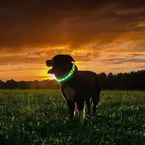 PetIsay LED Hundehalsband-USB wiederaufladbar mit wasserabweisend-Nylon Gurtband Glow in The Dark Pet Halsband Macht Ihren Hund sichtbar, Safe & gesehen, Large, neon Green -