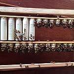 homyl Pack of 10Bee Queen Rearing Complete Beekeeping Equipment Kit Queen Lay White 10