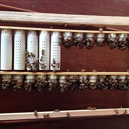 homyl Pack of 10Bee Queen Rearing Complete Beekeeping Equipment Kit Queen Lay White 5