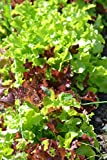 LETTUCE - GOURMET LOOSELEAF CUTTING MIX - 1500 SEEDS