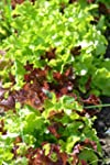 LETTUCE - GOURMET LOOSELEAF CUTTING M...