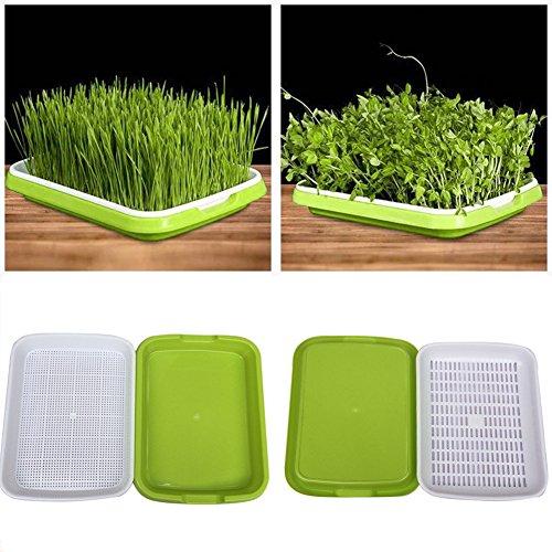 samen sprouter tray bpa frei baumschule tablett für sämlinge weizen grassierer pflanzer hydroponics samen keimung tablett für garten home office von yunhigh (Frei-haus-pflanzen)