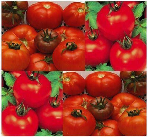 GEOPONICS 100: VERONICA ROMANESCO HYBRID CAULIFLOWER-NON-GMO ITALIAN VEGABLE GARDENING