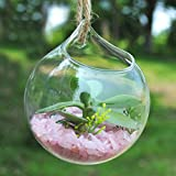 Sharplace Klar Glasvase Hängevase Dekovase für Pflanzen/Blumen, Balkon Garten Deko