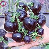 200 pcs / sac noir graines de tomates pot graines de variétés anciennes biologiques légumes délicieux tomate cerise pour le jardin de la maison Table alimentaire
