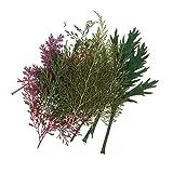 non-brand Sharplace Blumen Pressen, natürlichem echten Getrocknete Blumen - 24pcs Farbe 3, 25mm