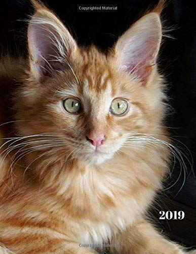 2019: Red Maine Coon Cat Weekly Planner Large Size 8.5 x 11 Organizer Diary with Goal Setting & Gratitude Sections (Nature and Animals, Band 7)