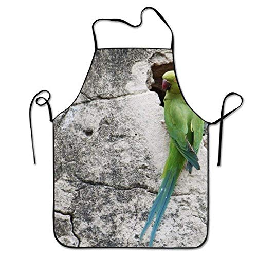 rinting Aprons Parrot On Rock for Home Stitched Edges ()