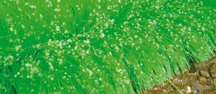 KoiBrush Ablaichbürste 150x15cm , 1 Stück, Ablaichhilfe für Koi im Gartenteich